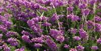 Les couleurs de la Bretagne du côté du cap Fréhel - 22240 Plevenon - dsc02596