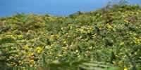 Les couleurs de la Bretagne du côté du cap Fréhel - 22240 Plevenon - dsc02682