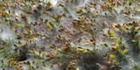 Les couleurs de la Bretagne du côté du cap Fréhel - 22240 Plevenon - dsc02793