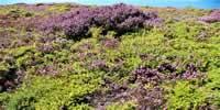 Les couleurs de la Bretagne du côté du cap Fréhel - 22240 Plevenon - p1340797